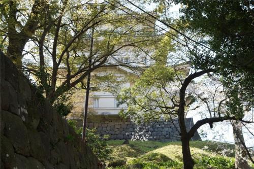 桜 in 小田原城