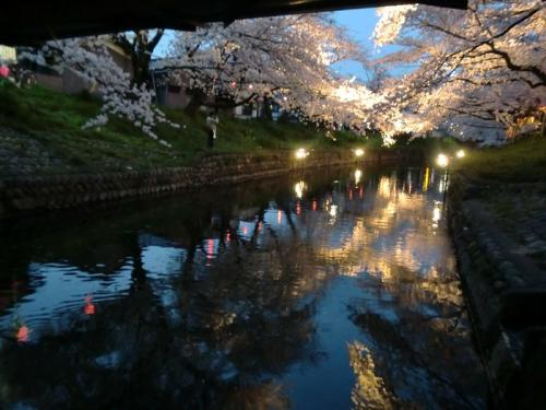 岩倉・大口五条川と新境川の桜2012(4月10日)