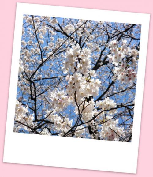 春爛漫♪矢切の渡しから寅さんの柴又へ