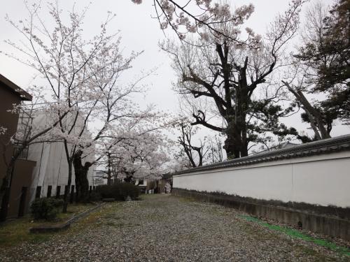 郡山城の桜☆お城まつり☆これからどうぞ宜しくお願いしますヽ(^o^)丿