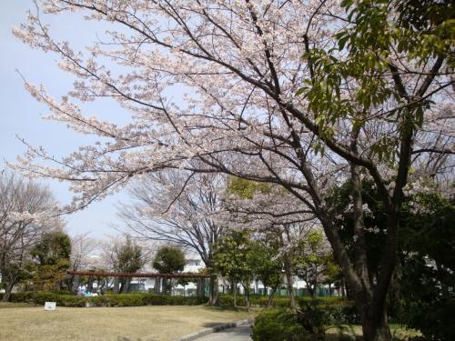 桜咲く浦安