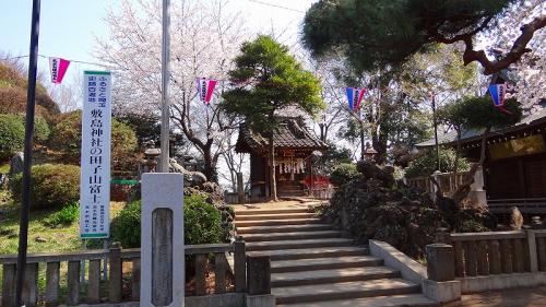 敷島神社の花見・・・志木市