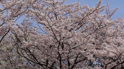 越谷市・・・能楽堂日本庭園「花田苑」の観賞 下編