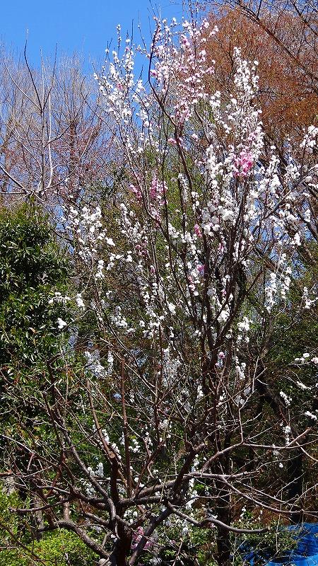 川口市 花と緑の振興センターの見学