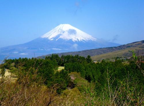 乙女桜と富士に見守られて春を歩く