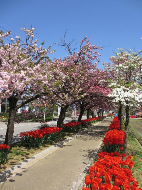 子どもと一緒に訪ねる、春麗らかな飛越地方 Vol.1:春色に輝く砺波チューリップ公園
