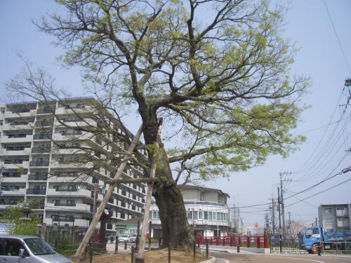 寺内町である奈良・今井町へ
