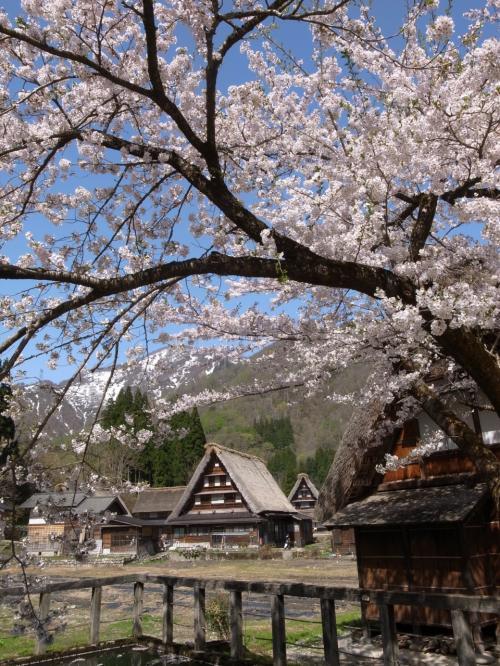 富山の街並みを見に行く