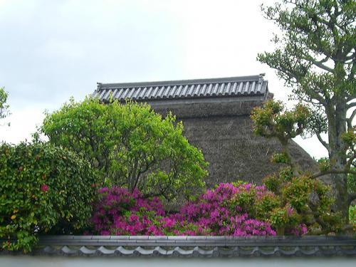 関西花の寺 23番霊場 金剛寺(牡丹寺)