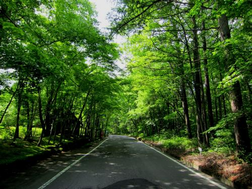 信濃路自然歩道 緑は輝いてた6月/2012