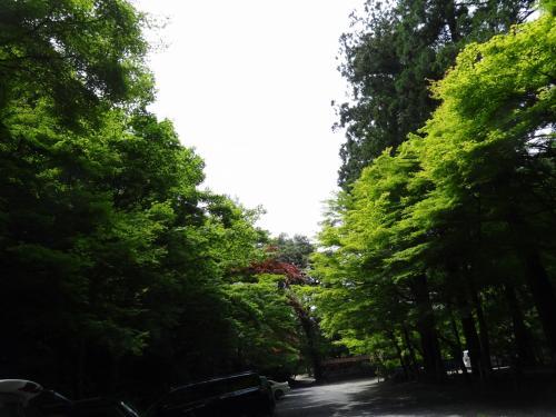 ★岐阜の里山★誕生山~白山(美濃市)~天王山