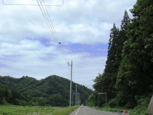 <行こう!新緑の東北旅・4>山形の「サクランボ」と東日本最大の「バラ園」を満喫するぞ~!