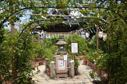 涼感を漂わせる「おふさ観音・風鈴祭り」 in Nara