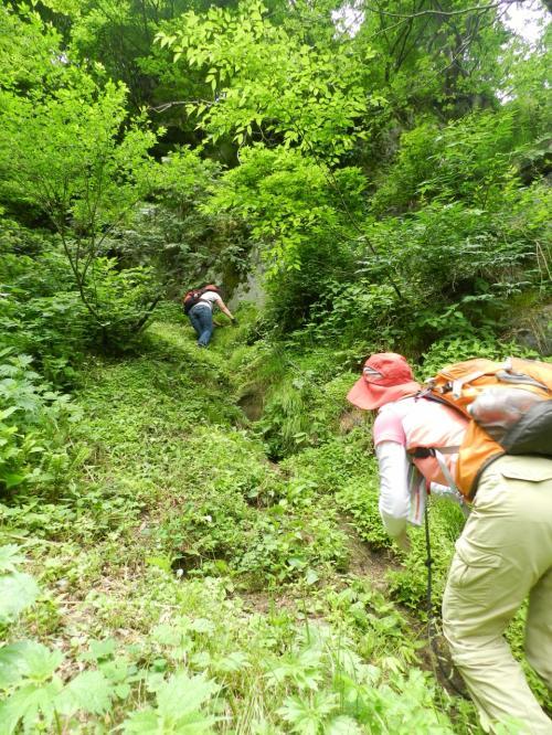 横山岳の『五銚子の滝』◆滋賀県北部の滝めぐり&山歩き≪第二章≫