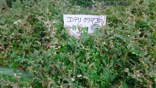 熱川ワニバナナ園(4)・・・最後は本園の植物園(2) 睡蓮以外の植物
