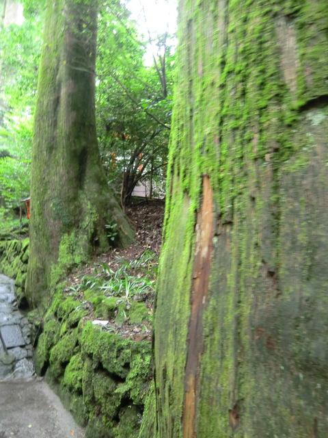 涼を求めて箱根・伊豆の旅♪ Vol.1箱根権現さんとザ・プリンス箱根「なだ万雅殿」