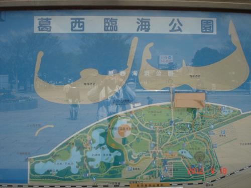 葛西臨海公園でバードウォッチング [2012](1)