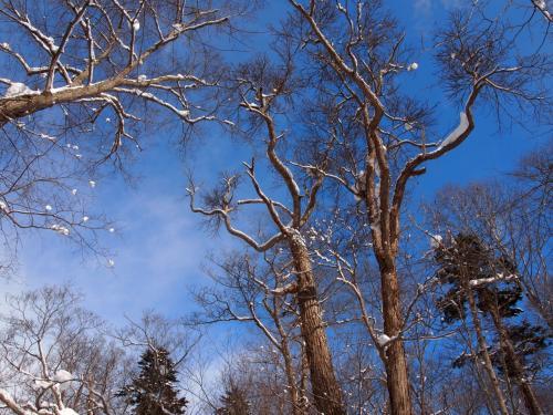 森の中へ ~冬・早春・晩秋の野幌森林公園~