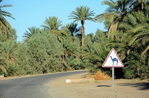 ★モロッコ再訪車旅(8) −ザゴラから最果ての町マアミドを往復してみる