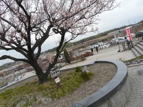 知多の佐布里池に春の訪れです