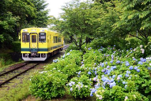 いすみ鉄道キハの旅 (ムーミン列車) と おまけのホタル