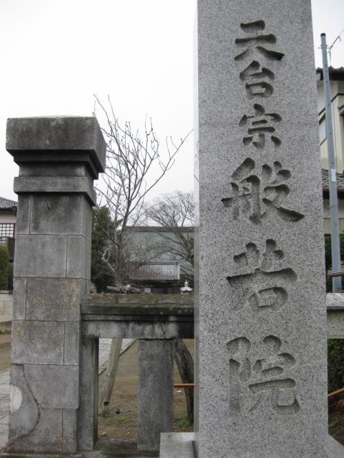 今日まさに満開!龍ヶ崎 般若院の江戸枝垂れ桜 2013年3月22日