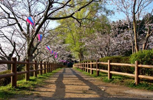 桜 茂原公園 (千葉県茂原市)