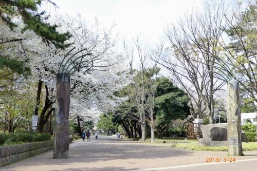 お花見 地元・平塚市総合公園