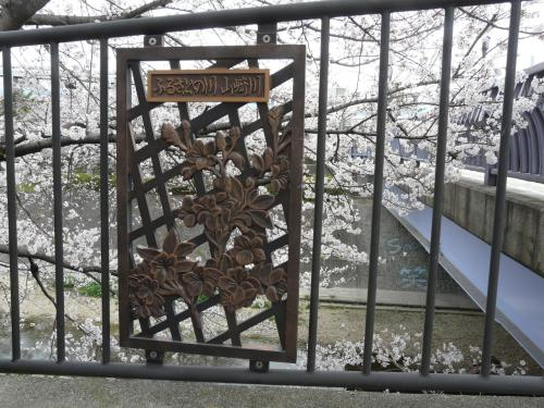 山崎川の五分咲き状況ですが、それ以上かも? 桜色になってました。