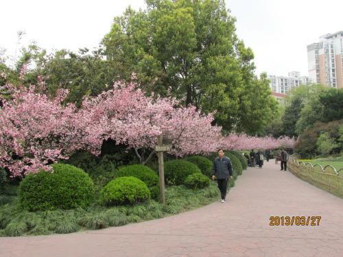 上海の閘北公園・13年春』 [上海...