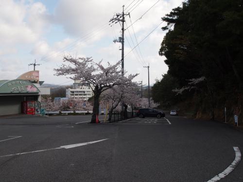 2013春 桜咲く、おのみち ~お花見さんぽ~