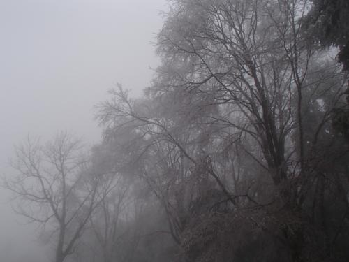 シーズン最後のスノーシュー ~玉原高原で自然界の輪廻を感じる~