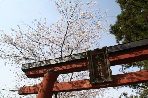 大和路の桜2 奈良公園、郡山城跡