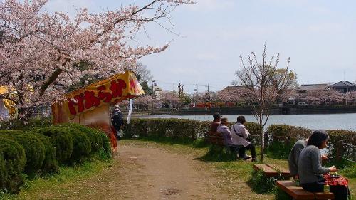 アメリカ15日間の旅前泊の花見(2)・・・東金市八鶴湖公園の観桜(2)