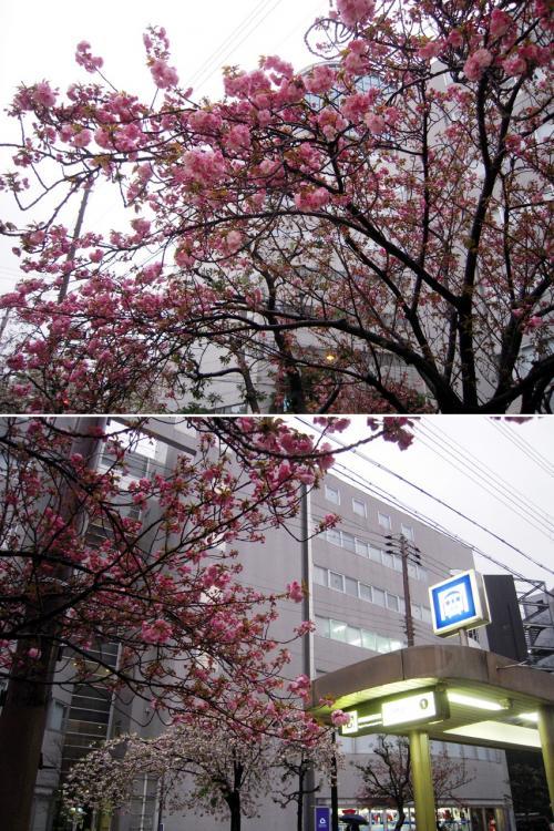春、出会い、笑い、語らい、感謝~4トラの友と時を過ごす・・・大阪and名古屋