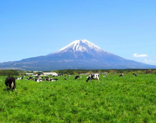 3年ぶりの富士芝桜まつり~富士運キープでふわふわ絨毯