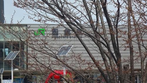 松前・江差・函館 桜旅情 3日間(31) 国指定の名勝庭園・・・香雪園の観桜