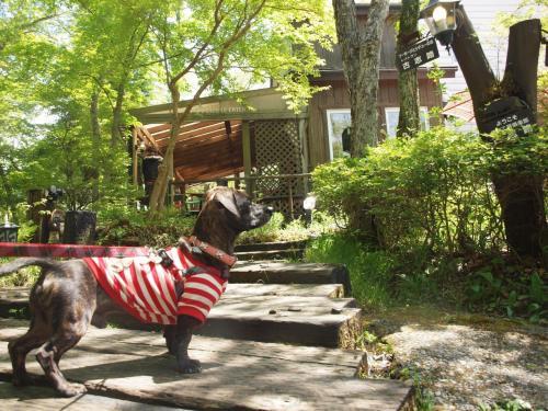 犬旅 ~山中湖~