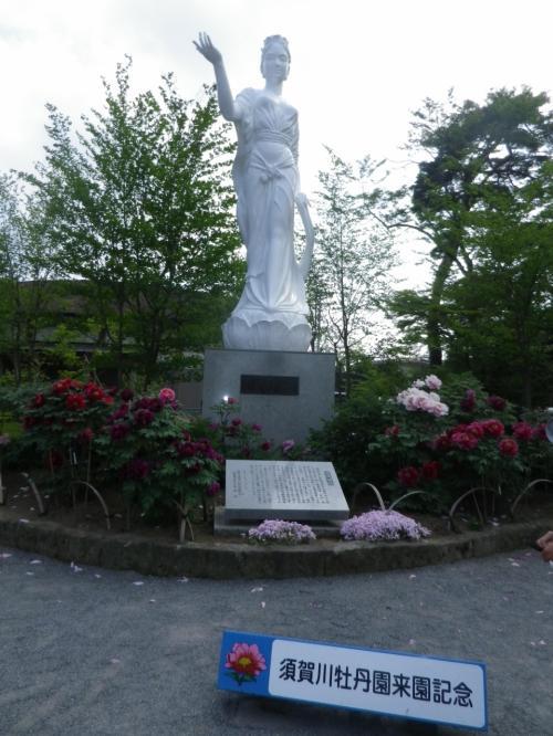 須賀川牡丹園で満開の牡丹(ぼたん)鑑賞