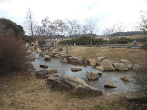 手賀沼でバードウォッチング [2013](2)