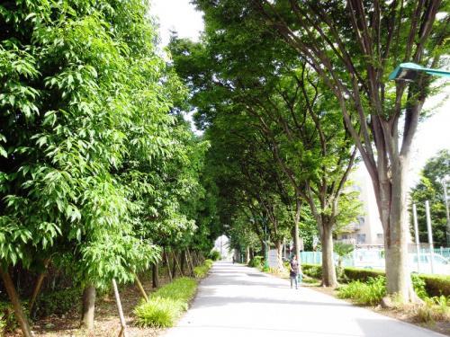 <東京・多摩散歩>100年前にタイムスリップ? 府中「郷土の森」新緑のあじさい祭り