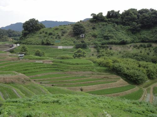 千早赤坂村の棚田