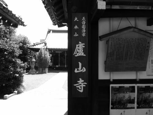 夏の日差しに凛として立つ廬山寺源氏の庭の桔梗