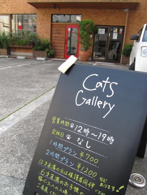ねこと過ごす癒しの時間。 @名古屋のねこカフェ「Cats Gallery」