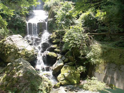 天涯の花「キレンゲショウマ」を訪ねて (2泊3日) 2日目 2−2 北川村温泉・ゆずの宿編