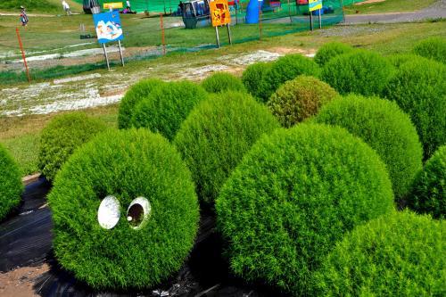 琵琶湖ぶらり  箱館山のゆり園など