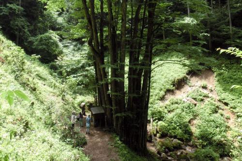 小さな旅●茶臼山山麓 7月の野草散策 2013