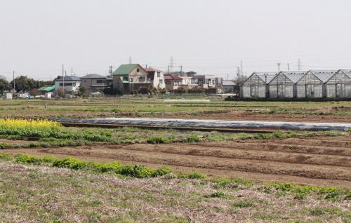 平塚市でバードウォッチング [2013](3)