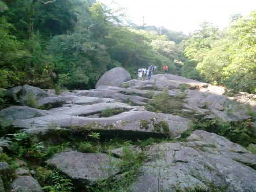 屋久島1人旅 3日目 ~ガイドさんによる案内での白谷雲水峡~