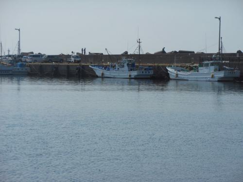 外川漁港でバードウォッチング [2013](1)